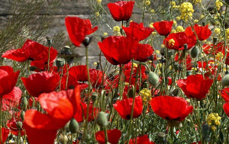 flowers-654722_960_720